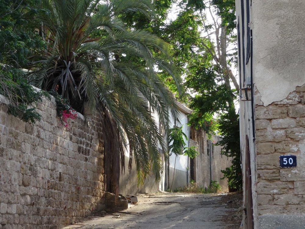 Jaffa | Ajami district | Palm in the street | photo sandrine cohen