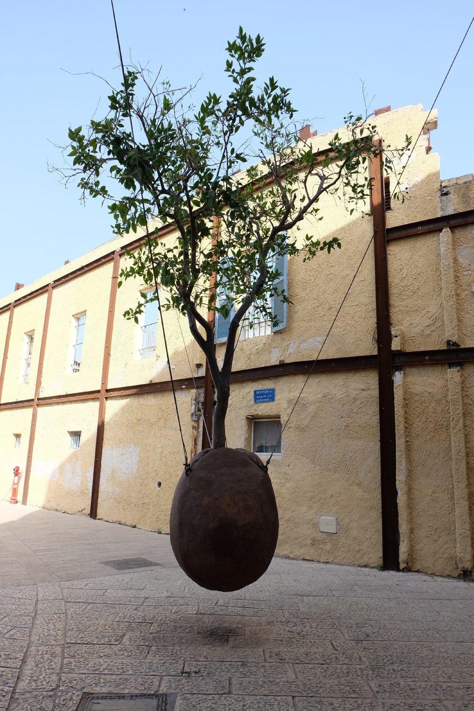 Old Jaffa | Suspended Orange Tree 2 | streetphotography sandrine cohen
