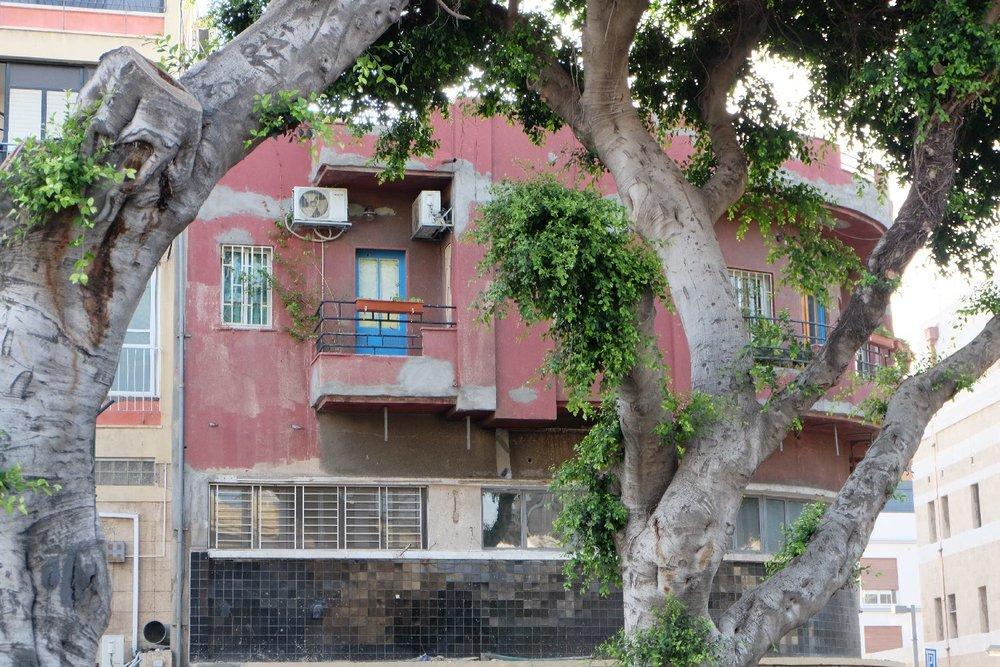 Jaffa | Old tree | streetphotography sandrine cohen