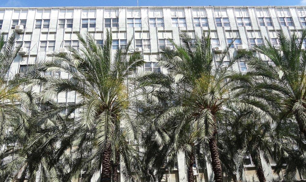 Haifa | Palms on the street | photo sandrine cohen