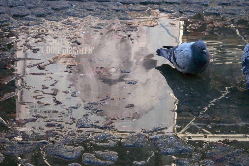 Georges Pompidou reflection on water | Pigeon de Paris | Centre Pompidou Paris | photo sandrine cohen
