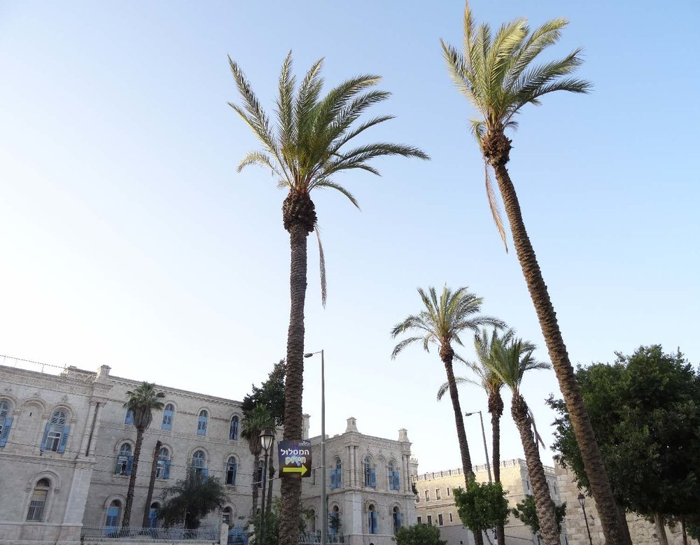 Jerusalem | Houses and Palms in front of old city | photo sandrine cohen
