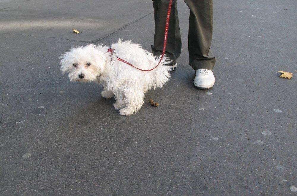Chien à l'aise sur un trottoir de Paris | photo sandrine cohen