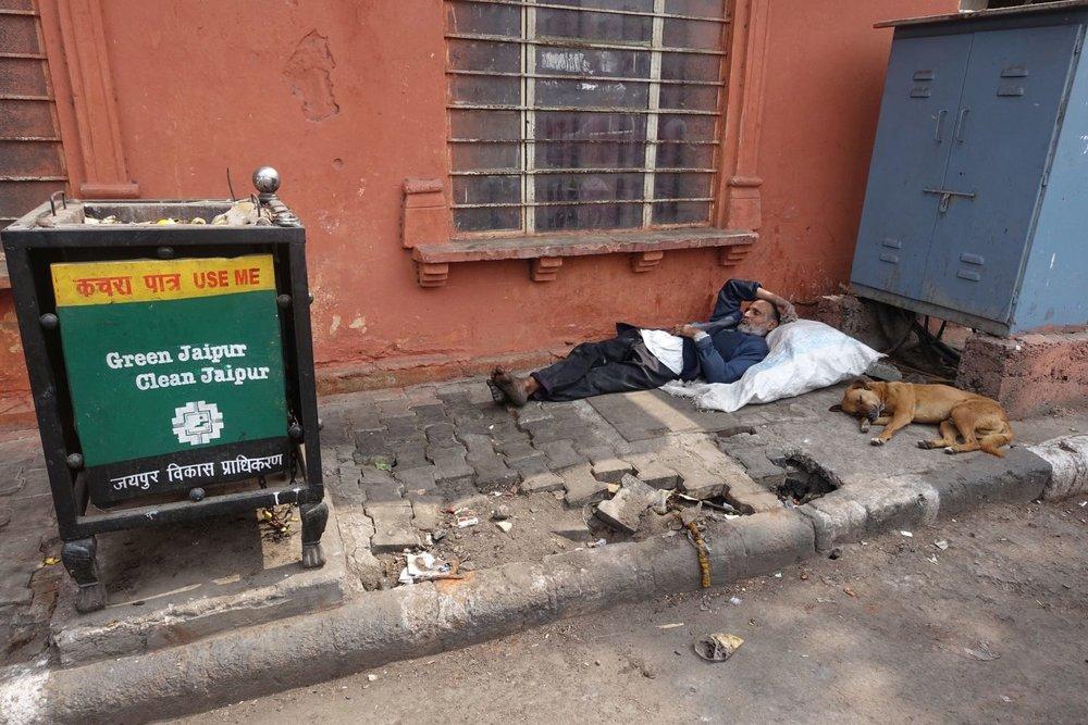 Dog sleeping at Green Jaipur | Jaipur | Rajasthan | India | photo sandrine cohen