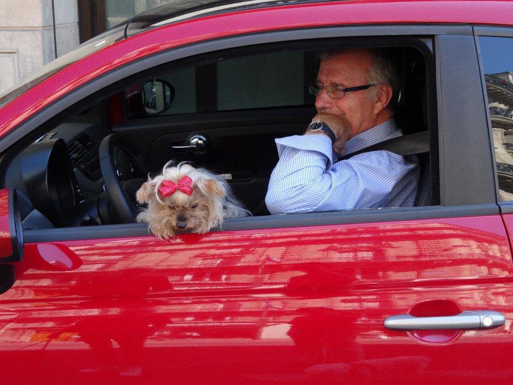 Chien avec ruban rouge dans voiture rouge | Paris | photo sandrine cohen