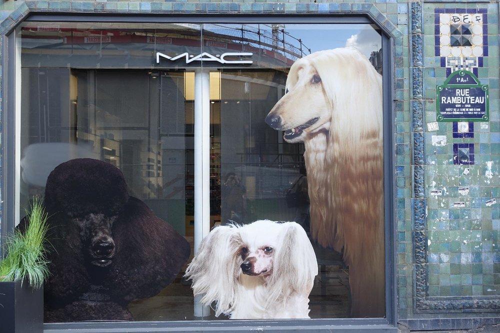 Chiens collés en vitrine | Paris | photo sandrine cohen
