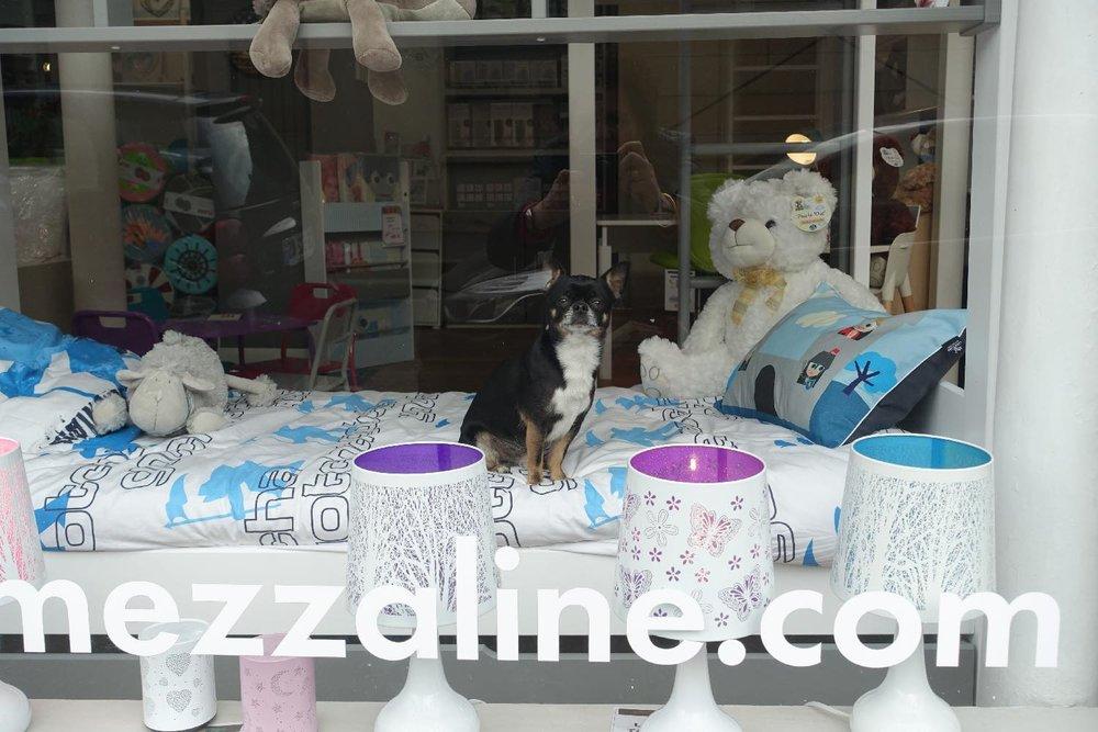Chien garde la vitrine du magasin | Paris | photo sandrine cohen