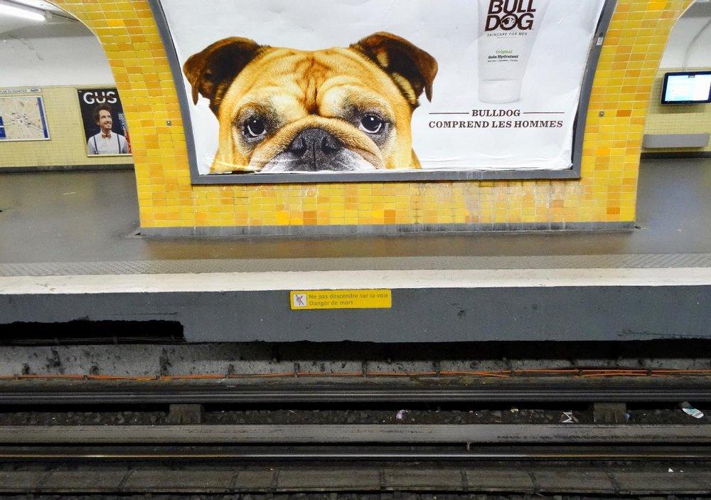 Publicité avec Bouledogue dans le métro | Paris | photo sandrine cohen