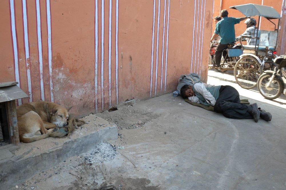 Dog at Jaipur | Jaipur | Time to sleep | photo sandrine cohen