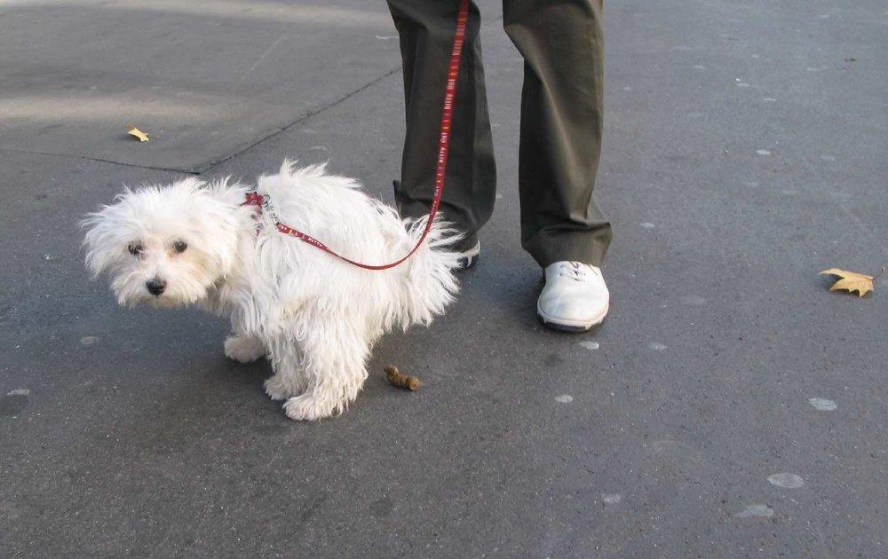 Toilettes pour chien dans les rues de Paris | Bichon | Paris | photo sandrine cohen