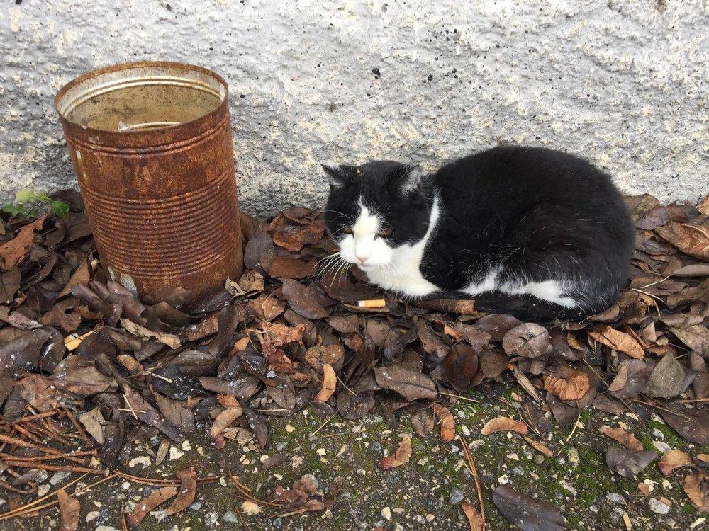 Chat suisse | Swiss cat | Switzerland | photo sandrine cohen