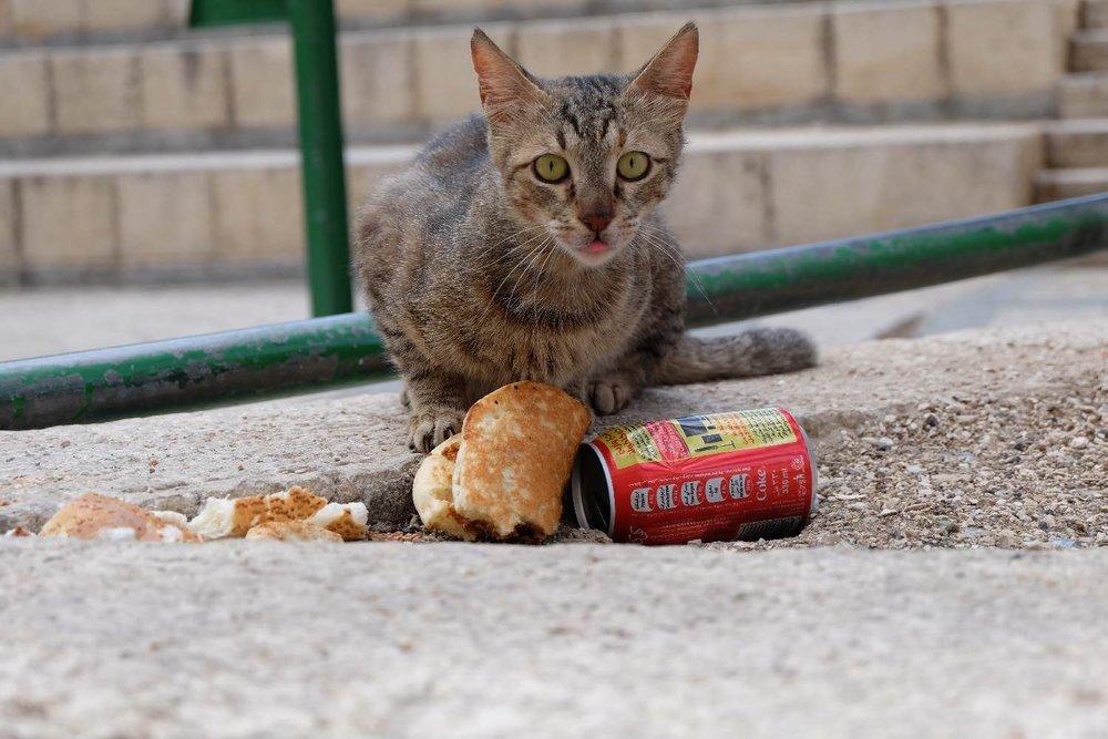 Cat Jerusalem old city | Chat à Jerusalem | photo sandrine cohen