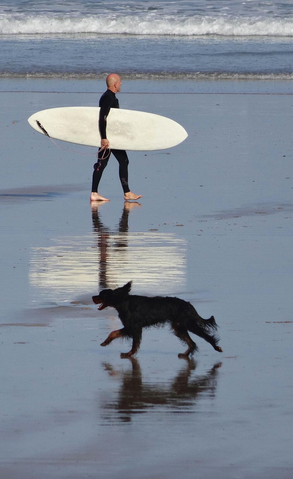 Chien noir croise surfeur sur la plage | Hendaye | Basque coast | photo sandrine cohen