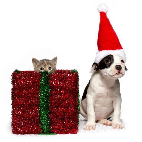 Bring your pet to our new shelter for photos with Santa! Saturday, December 8th from 1:00-4:00pm. $5 per photo - cash only! 🐶🎅🏻🎄#caapets