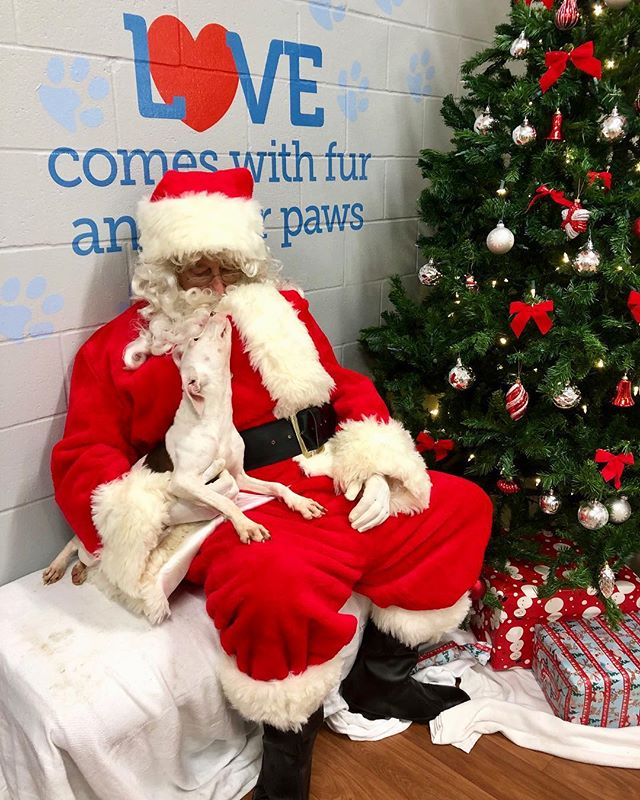 Pet photos with Santa 🎄🎅🏻🐶 #caapets