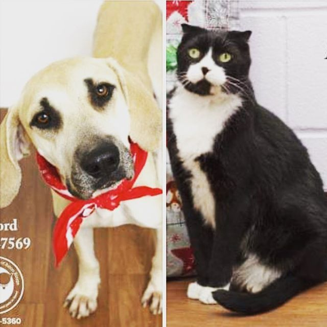 On this fourth day of Christmas our adoption special is $12 for all senior pets (4 years and older). Come by CAA today to adopt one of our seasoned and matured companions 🐶🎅🏻🐱