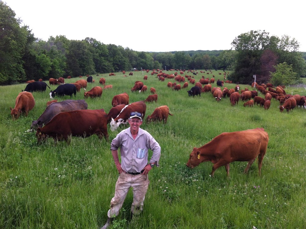 Greg Judy Cattle mob picture.JPG