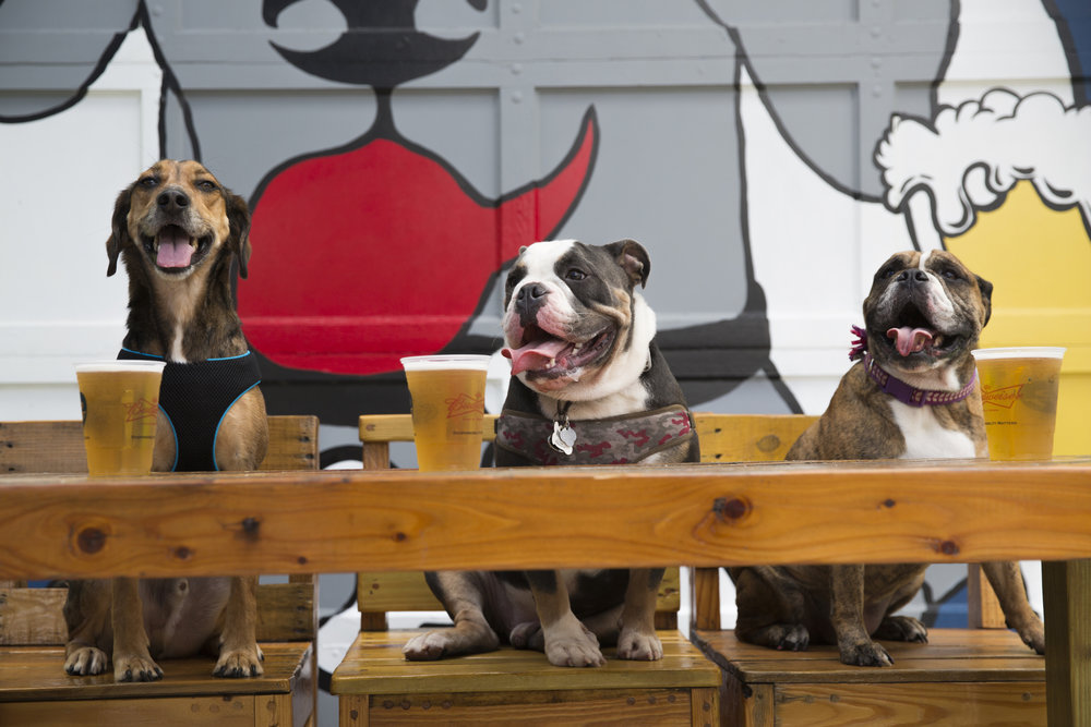 Dogs Having a Drink at the Dog Bar - Downtown St. Pete.jpg