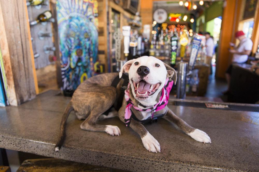 The Dog Bar - Downtown St. Pete.jpg