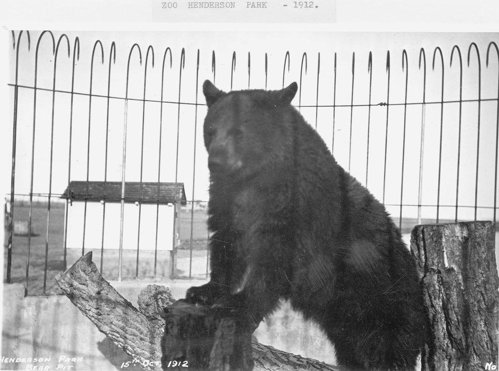 Henderson Lake 1912 bear in the Henderson Lake zoo 19760219024 p 74.jpg