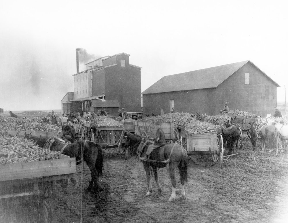 Raymond Sugar Beet and Flour Milling Industries, 1902.  Courtesy the Galt Museum & Archives: P19871034037