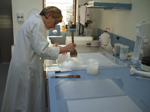 conservation_work08.jpg