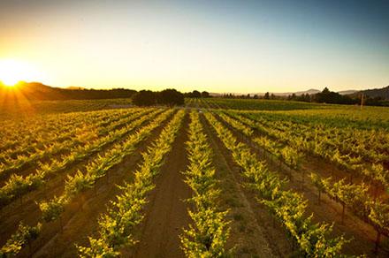 foppiano_vineyards.jpg