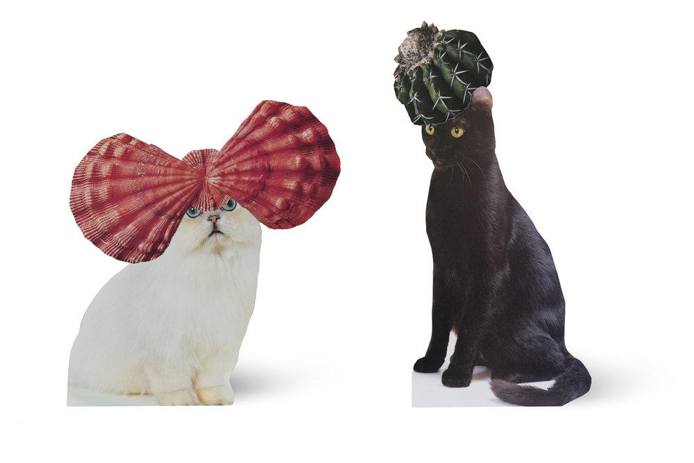 SE-Cats&PlantsStandup-1.jpg