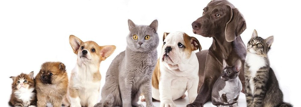 Cats-and-Dogs-1400x500.jpg