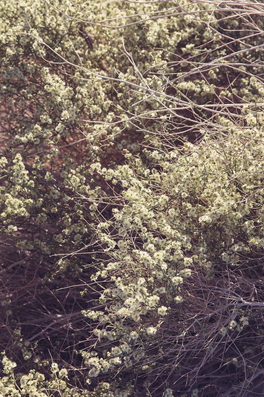 desert_flora.jpg