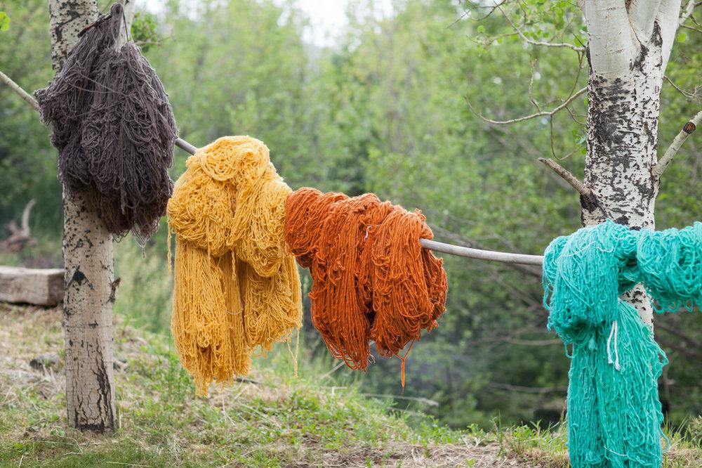 churro_sheep_wool.jpg