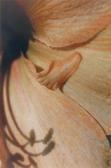 myartflower5.jpg
