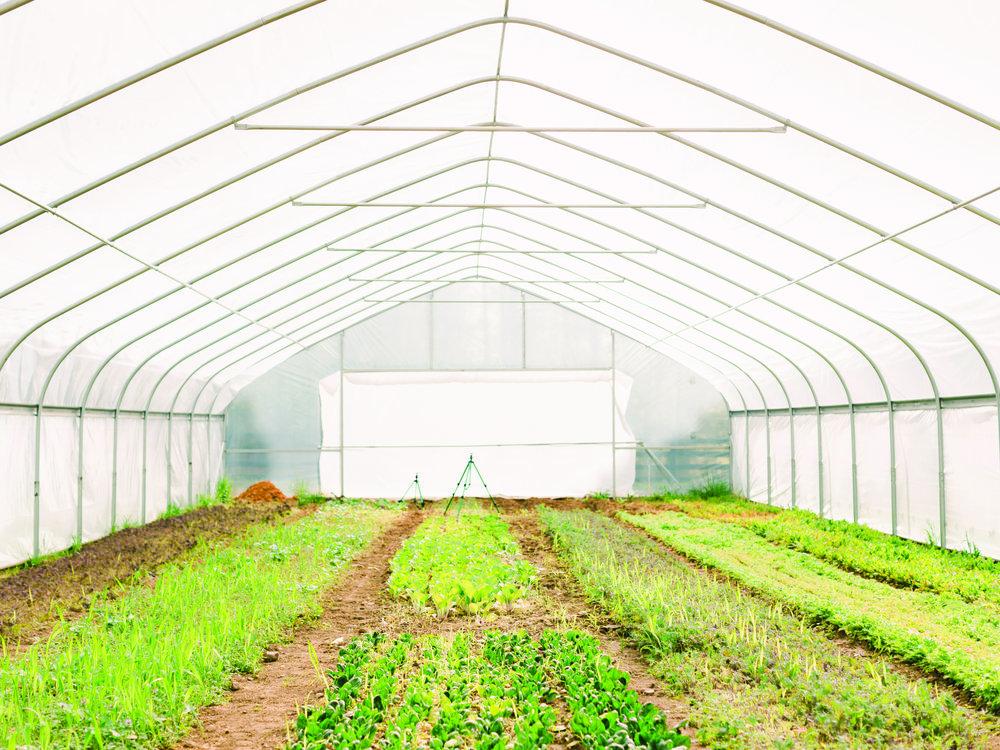- Educational School Garden Series Teaches New Generation
