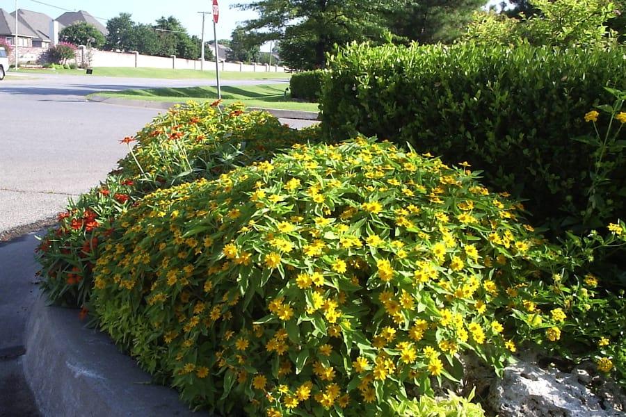 Weekly Landscape & Lawn Service -