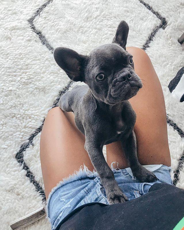 Back by popular demand, my dog nephew @winzstagram