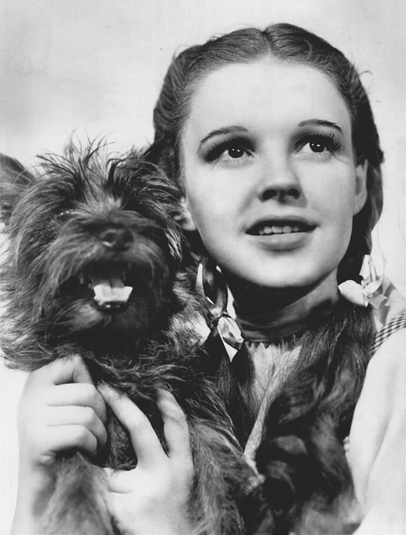 The_Wizard_of_Oz_Judy_Garland_Terry_1939.jpg