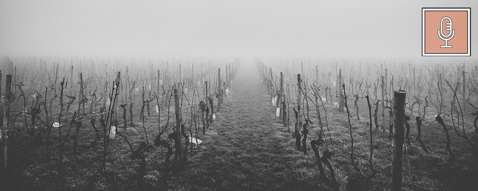 wine-ft-final.jpg