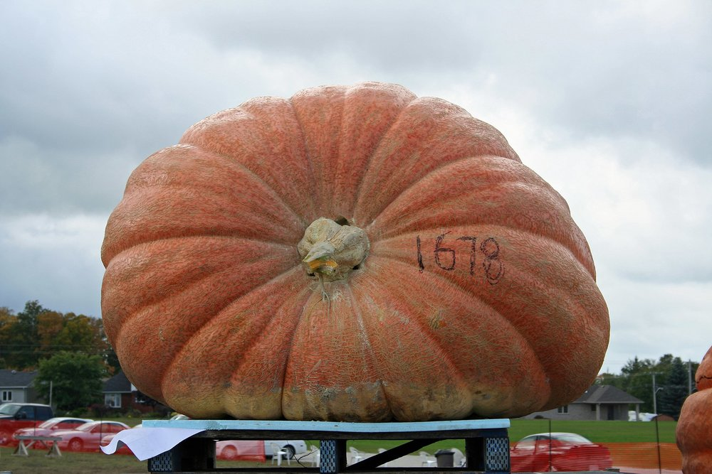 2048px-Pumpkinfest2009PortElgin.jpg