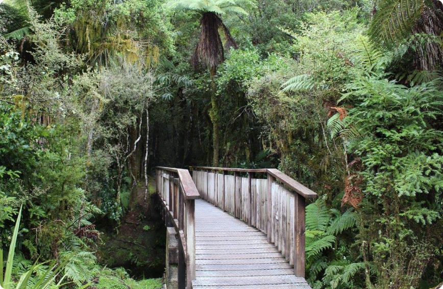 Bridge near Lake Matheson, Aotearoa. Photo: Andrew MacDonald
