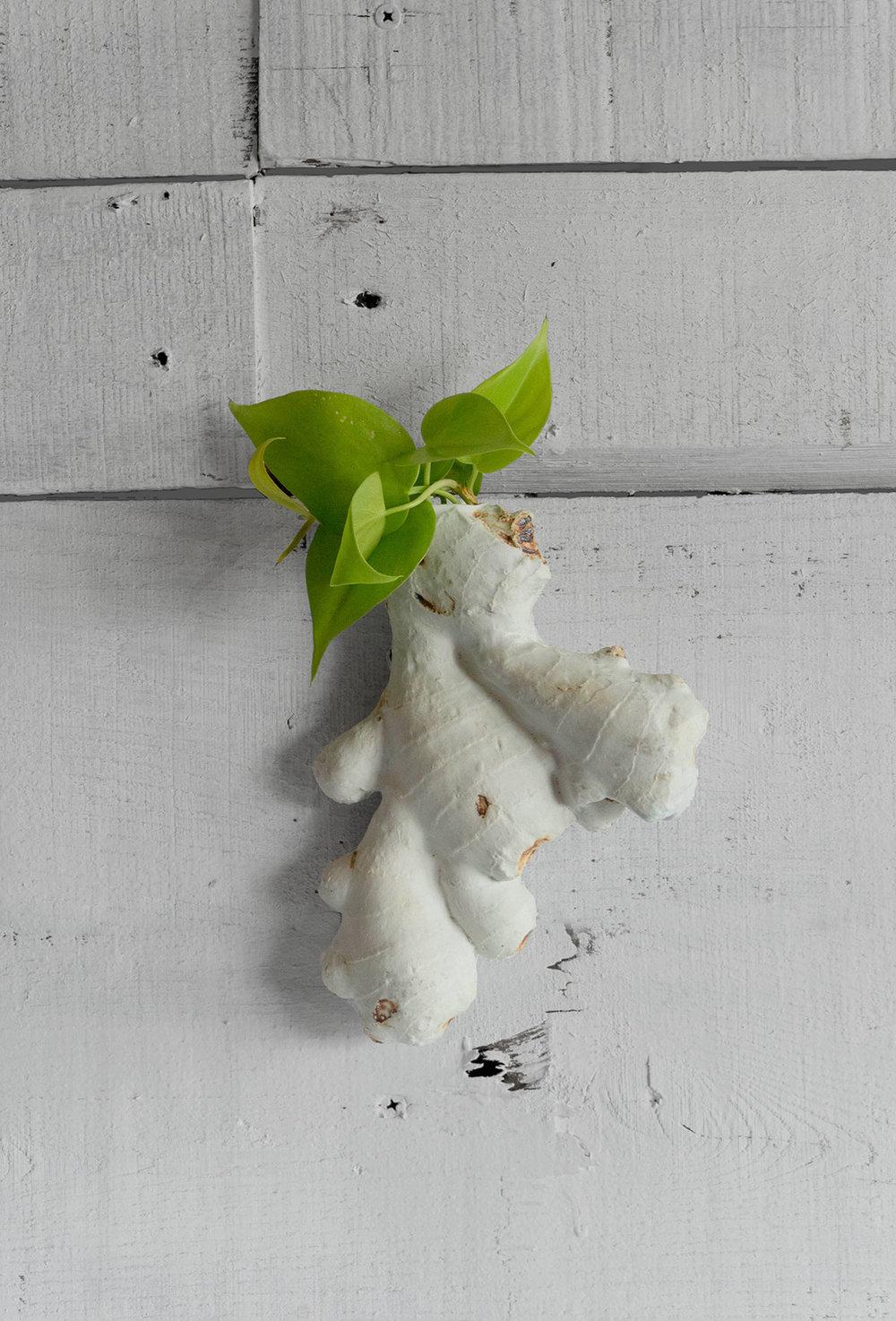 ginger-planter-web.jpg