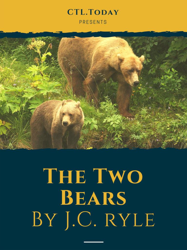 4445-bear-2-1-768x1024.jpg