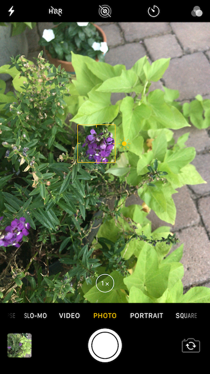 How to use your iphone's focus tool