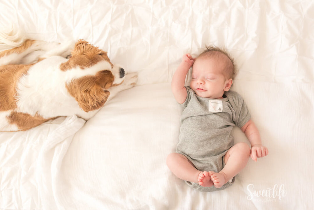 Scottsdale In home newborn photographer | Sweetlife Photography