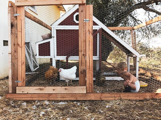 He loves his chickens! #thisiscopper