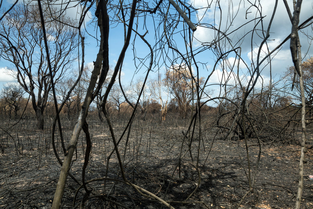 May 24, 2016 - Prek Toal, Cambodia. In the dry season of 2016, large fires ravaged forests around the Tonle Sap lake - opening new fishing grounds and destroy an already fragile habitat for fish and wildlife. © Nicolas Axelrod / Ruom