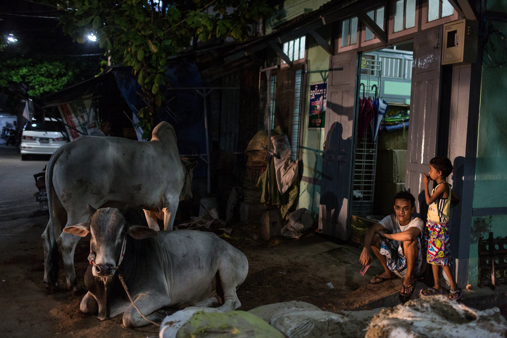 Sept. 21, 2015 - Mandalay, Myanmar. A closed community near Joon Mosque stays on high alert a head of Eid Al Adha. The sacrifice of cattle, which is sacred to devout Buddhists, is common during Eid. Muslim communities in Mandalay held religious rituals behind closed doors during Eid due to pressures by the Ma Ba Tha. © Nicolas Axelrod / Ruom