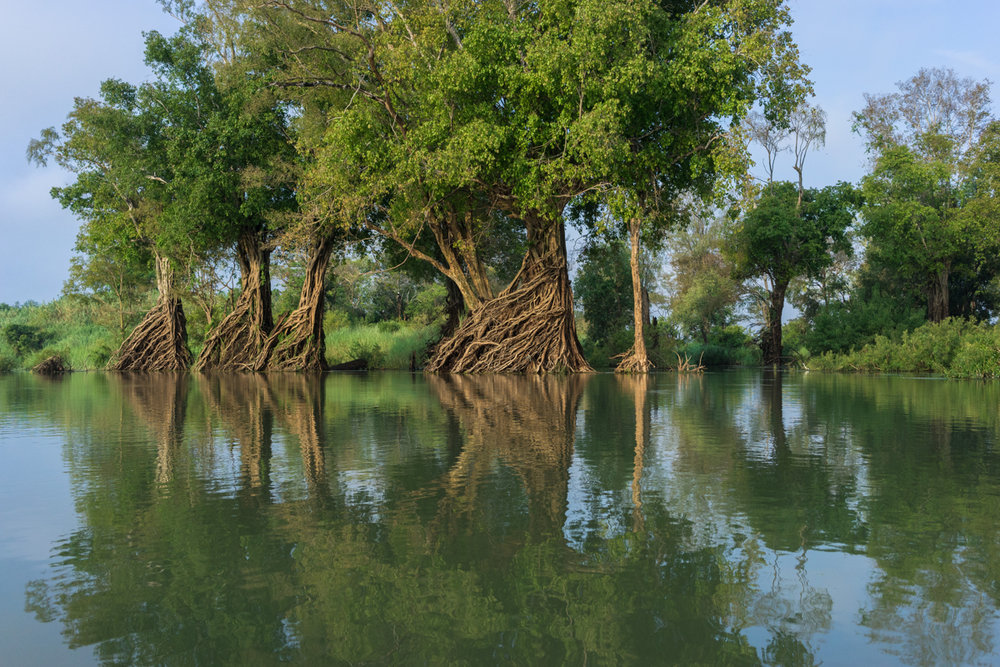 WWF�s conservation work in the greater Mekong
