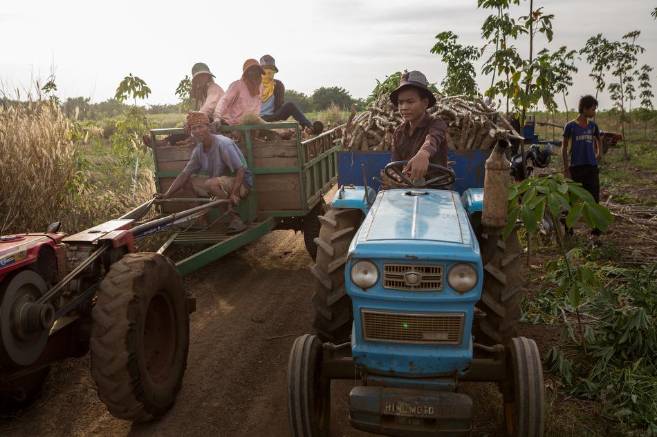 December 26, 2013 - Kampong Cham, Cambodia. Mr Ol Neng and Mrs. HY Sengteun harvest cassava, Angkor Chey Village. © Nicolas Axelrod / Ruom for SNV