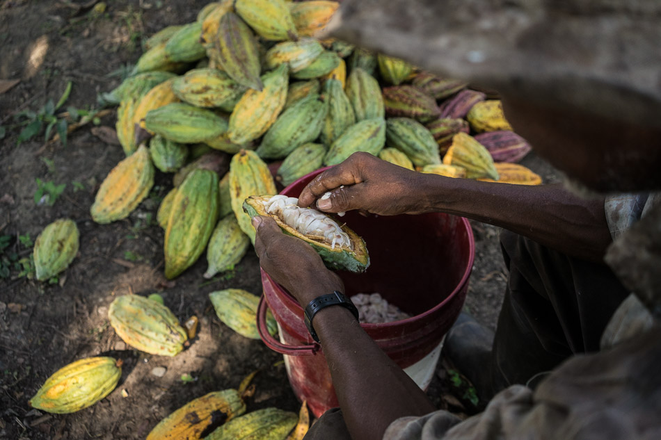 COLOMBIA - From coca to cacao