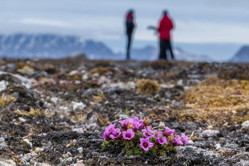 Peter Vancoillie - Svalbard 2018 selectie Sofie - 4010 copy.jpg